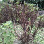 猛暑に耐えた植物たち