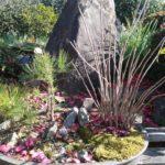 ハゼノキ(盆栽)の植え替え